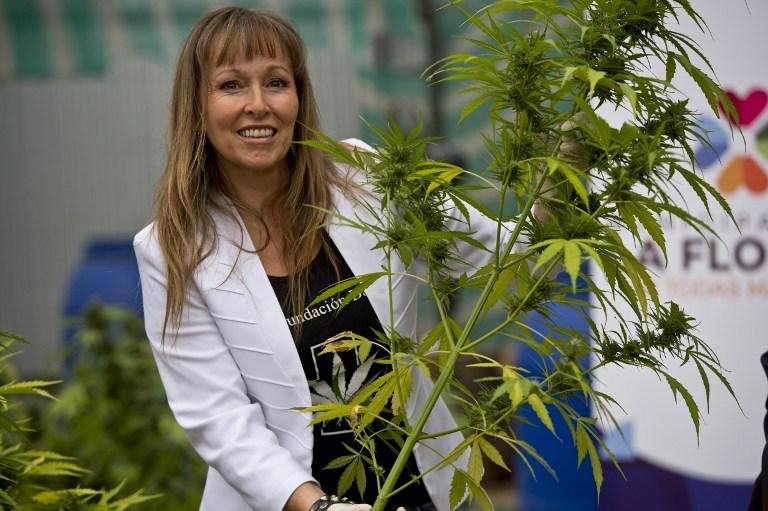 """Fundación Daya: """"quien vote en contra de la Ley Cultivo Seguro está diciendo que el Estado debe criminalizar, perseguir, encarcelar y quitarle las plantas a un paciente"""""""